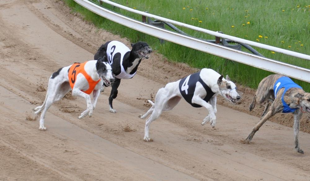 Insku (4) ja Pisama (5) startissa. Kuva Erkki Ruusunen.
